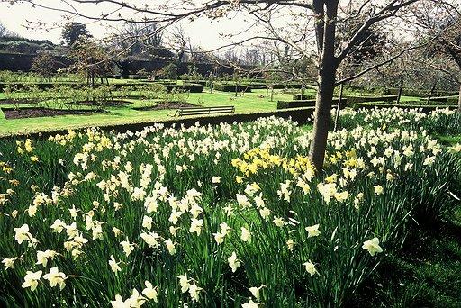bodysgallen-spring-garden