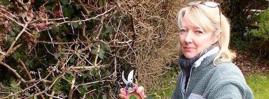 Chris Beardshaw 39 S Healthy Cities Garden